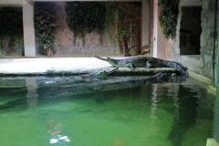 1. chovná skupina gaviálů indických v protivínské zoo