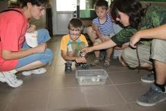 07 Ošetřovatel Jan Sobotka ukazuje návštěvníkům líhnoucího se krokodýla siamského